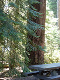 Πικ-νίκ στη λίμνη του ξύλο-Oregon.jpg Στοκ φωτογραφία με δικαίωμα ελεύθερης χρήσης