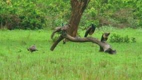 Πικ-νίκ Peacock Στοκ Εικόνες