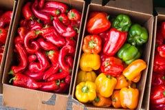Πιπέρια κουδουνιών και καυτά πιπέρια της Πορτογαλίας Στοκ φωτογραφία με δικαίωμα ελεύθερης χρήσης