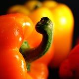 πιπέρια κουδουνιών Στοκ Εικόνα