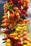 πιπέρια Στοκ εικόνα με δικαίωμα ελεύθερης χρήσης