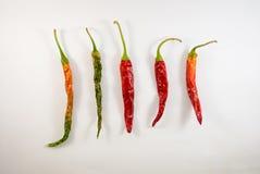 πιπέρια Στοκ Φωτογραφίες