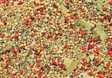 πιπέρι δημητριακών Στοκ Εικόνες