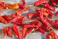 Πιπέρι του Cayenne (καψικό annuum) Στοκ φωτογραφία με δικαίωμα ελεύθερης χρήσης