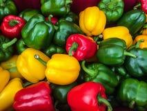 Πιπέρι χρώματος Στοκ Εικόνες