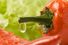 πιπέρι στοκ εικόνες με δικαίωμα ελεύθερης χρήσης