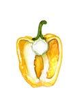 Πιπέρι Watercolor Στοκ φωτογραφία με δικαίωμα ελεύθερης χρήσης