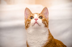 πιπερόριζα αντιγράφων γατών που ανατρέχει διαστημική Στοκ εικόνα με δικαίωμα ελεύθερης χρήσης