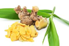 Πιπερόριζα Cassumunar, ένα βασικό συστατικό για το ταϊλανδικό πετρέλαιο μασάζ Στοκ Φωτογραφία