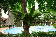 Πισίνα, αργόσχολοι ήλιων δίπλα στον κήπο και κτήρια στοκ φωτογραφίες
