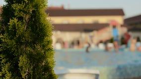 Πισίνα δέντρων κυπαρισσιών πλησίον με τους ανθρώπους στο υπόβαθρο απόθεμα βίντεο