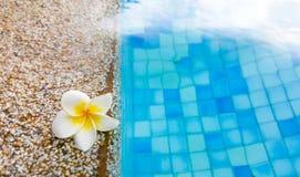 Πισίνα στο clubhouse με το λουλούδι Στοκ Εικόνα