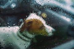 Πιστή μικρή συνεδρίαση σκυλιών σε ένα αυτοκίνητο στη βροχερή ημέρα στοκ φωτογραφίες