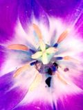 Πιστόλια ενός λουλουδιού Στοκ Εικόνα