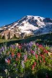 πιό βροχερά wildflowers στοκ φωτογραφίες με δικαίωμα ελεύθερης χρήσης