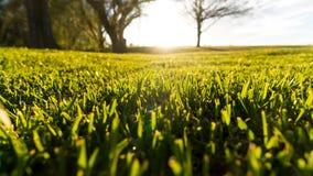 Πιό πράσινος από την άλλη πλευρά στοκ εικόνες