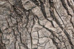 Πιό στενός φλοιός του δέντρου Στοκ φωτογραφίες με δικαίωμα ελεύθερης χρήσης