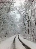 πιό forrest παγωμένος Στοκ φωτογραφία με δικαίωμα ελεύθερης χρήσης
