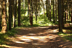 πιό forrest πράσινη φύση Στοκ φωτογραφίες με δικαίωμα ελεύθερης χρήσης