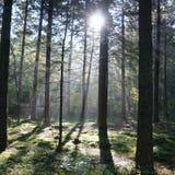 πιό forrest φύση ουρανού ήλιων δέντρων Στοκ εικόνες με δικαίωμα ελεύθερης χρήσης