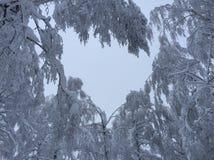 πιό forrest χειμώνας Στοκ Εικόνες