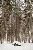 πιό forrest χειμώνας Στοκ φωτογραφίες με δικαίωμα ελεύθερης χρήσης