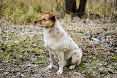 Πλάγια όψη της όμορφης συνεδρίασης περιπλανώμενων σκυλιών στο έδαφος το φθινόπωρο Στοκ Εικόνες