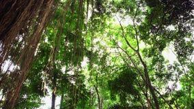Πλάκες επίστρωσης που εισβάλλονται με το βρύο Περίπατος μέσω της πορείας τροπικών δασών απόθεμα βίντεο