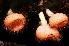 πλάσματα μικρά Στοκ Φωτογραφίες
