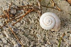 Πλήρες βρώμικο Nautilus Shell στο επίγειο υπόβαθρο Στοκ φωτογραφία με δικαίωμα ελεύθερης χρήσης