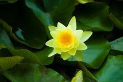 πλήρες καλοκαίρι λουλ&o Στοκ εικόνα με δικαίωμα ελεύθερης χρήσης