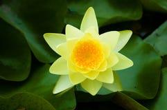 πλήρες καλοκαίρι λουλ&o Στοκ φωτογραφίες με δικαίωμα ελεύθερης χρήσης