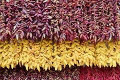 Πλήρες πλαίσιο που βλασταίνεται των κόκκινων και κίτρινων πιπεριών τσίλι στοκ εικόνες με δικαίωμα ελεύθερης χρήσης