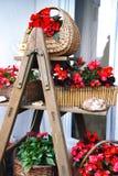 πλήρες stepladder λουλουδιών Στοκ Φωτογραφίες