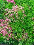 Πλήρης άνθιση λουλουδιών στοκ εικόνα