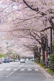 Πλήρης άνθιση του άνθους Sakura κερασιών στο Τόκιο, Ιαπωνία στοκ εικόνα με δικαίωμα ελεύθερης χρήσης
