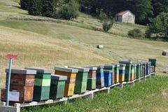 πλήρης παραγωγή μελιού κυψελών μελισσών Στοκ φωτογραφία με δικαίωμα ελεύθερης χρήσης