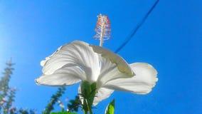 Πλήρη λουλούδια ομορφιάς στοκ φωτογραφία