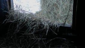 Πλήρωση του hayloft απόθεμα βίντεο
