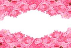 Πλαίσιο από τα ρόδινα τριαντάφυλλα στο άσπρο υπόβαθρο Επίπεδος βάλτε Τοπ όψη Στοκ Φωτογραφίες