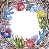 Πλαίσιο λουλουδιών κάκτων Wildflower σε ένα ύφος watercolor Στοκ φωτογραφίες με δικαίωμα ελεύθερης χρήσης