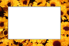 πλαίσιο λουλουδιών Στοκ Φωτογραφίες