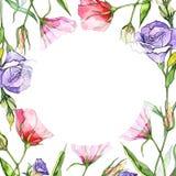 Πλαίσιο λουλουδιών eustoma Wildflower σε ένα ύφος watercolor Στοκ εικόνες με δικαίωμα ελεύθερης χρήσης