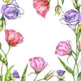 Πλαίσιο λουλουδιών eustoma Wildflower σε ένα ύφος watercolor Στοκ φωτογραφία με δικαίωμα ελεύθερης χρήσης