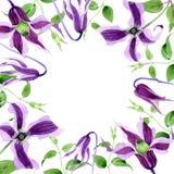 Πλαίσιο λουλουδιών hanajima clematis Wildflower σε ένα ύφος watercolor Στοκ εικόνες με δικαίωμα ελεύθερης χρήσης