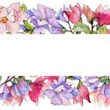 Πλαίσιο λουλουδιών magnolia Wildflower σε ένα ύφος watercolor Στοκ Εικόνες