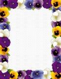 Πλαίσιο λουλουδιών Pansy, ανασκόπηση σημείων Πόλκα Στοκ Εικόνες