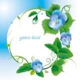 πλαίσιο λουλουδιών pansy Στοκ εικόνες με δικαίωμα ελεύθερης χρήσης