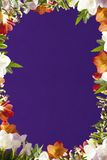 πλαίσιο λουλουδιών Στοκ εικόνες με δικαίωμα ελεύθερης χρήσης