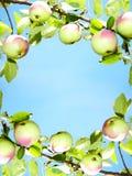 πλαίσιο μήλων Στοκ Εικόνες